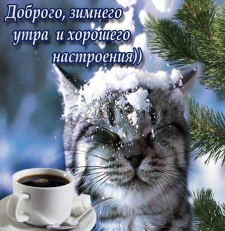 котлов красивые зимними картинки с добрым утром свадебное