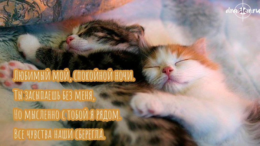 Сладких снов любимый смешные картинки