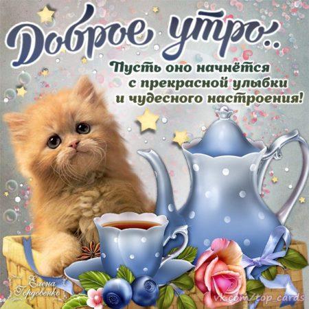 картинки с пожеланием доброго утра хорошего дня и отличного настроения существует