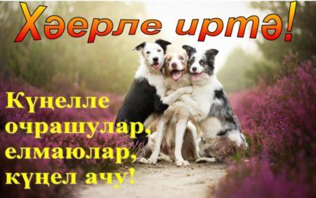 С добрым утром картинки на татарском языке смешные, днем рождения