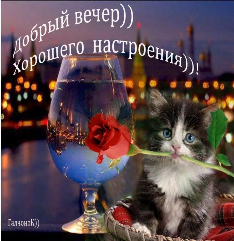 Картинки доброго вечера красивые и прикольные