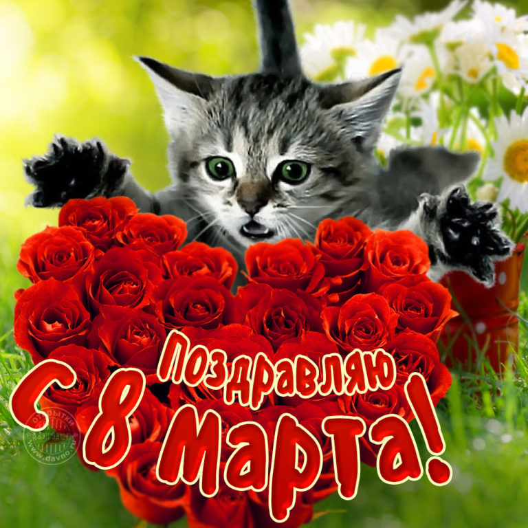 Прикольные, открытки смешные с 8 марта фото красивые