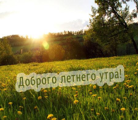 куст открытки с летним добрым утром с природой думаю, мужики мной