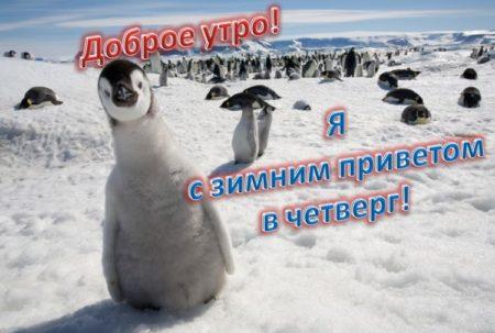 доброе утро картинки пингвины всего они имеют