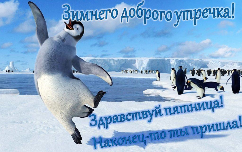 Утро пятницы картинки прикольные смешные зимние